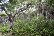 Paisaje a lo largo del rastro del salvaje Pacífico - foto de stock