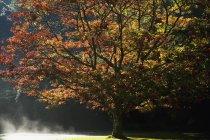 Кольору осені у Muckross сади — стокове фото