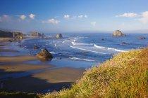 Flores silvestres y formaciones rocosas a lo largo de la costa - foto de stock