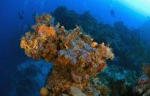 Coraux et éponges sur le récif — Photo de stock