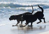 Dois cachorros brincando — Fotografia de Stock