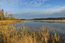 Вода озера с высокой травой — стоковое фото