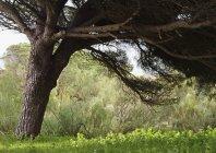 Árvore grande sombreamento plantas abaixo — Fotografia de Stock