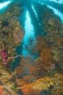 Sea Life At Dumaguete Pier — Stock Photo
