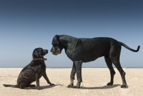 Grand et petit chien — Photo de stock