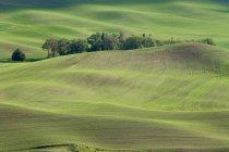 Vista do vale de grama verde — Fotografia de Stock