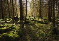 Suelo del bosque en el parque del descubrimiento de Castelcomer - foto de stock