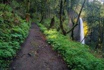Trail And Latourell Falls — Stock Photo