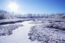 Морозний холодний краєвид — стокове фото