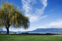 Baum im Park über grünen Rasen — Stockfoto