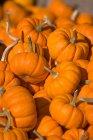 Montón de calabaza naranja - foto de stock