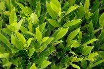 Вид из лиственных растений — стоковое фото