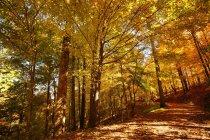 Vista del bosque en otoño - foto de stock