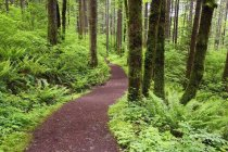 Trail In Columbia River Gorge National Area — Stock Photo