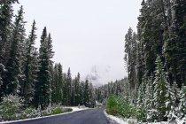 A Beautiful Winter Road — Stock Photo