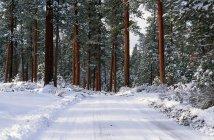 Strada di inverno nella foresta del pino di Ponderosa — Foto stock