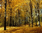 Trees in autumn Forest — Stock Photo