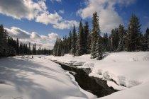 Flusso di inverno con la foresta — Foto stock