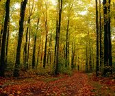 Árvores com folhas de outono na floresta — Fotografia de Stock