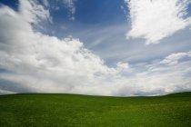 Grüne Landschaft in Landschaft — Stockfoto