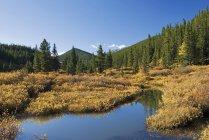 Creek In Kananaskis In Autumn — Stock Photo
