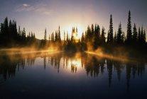 Сонячними променями через туман над ставком — стокове фото