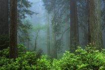 Early Morning In Forest — Stock Photo