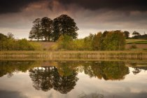 Trees Reflected In Water — Stock Photo