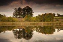 Árboles se refleja en el agua - foto de stock
