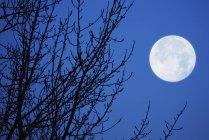 Полная Луна против неба. — стоковое фото