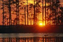 Malerischen Sonnenuntergang Wald — Stockfoto