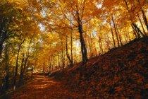 Bosque en otoño con árboles - foto de stock