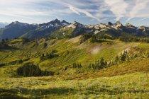 Cime montuose con erba verde — Foto stock