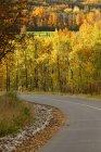 Осенняя сцена с дорогой — стоковое фото