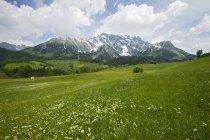 Alpine Landschaft mit grünen Rasen — Stockfoto