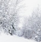 Winter-Wunderland mit Bäumen — Stockfoto