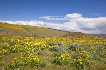 Wildflowers growing Along Hillside — Stock Photo