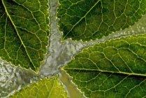 Детали листьев на воде — стоковое фото
