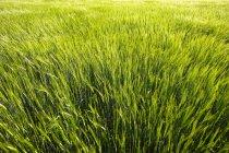 Grass Field outdoors — Stock Photo