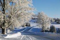 Route de doublure arbres en hiver — Photo de stock
