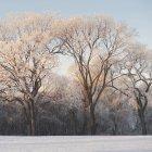 Schnee auf dem Boden und Bäume — Stockfoto