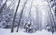 Winter Wonderland with snow — Stock Photo
