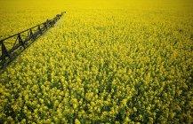 Bauernfeld mit Blumen — Stockfoto