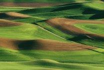 Зеленые поля с холмами — стоковое фото
