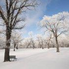 Gelo e neve che copre la panca — Foto stock