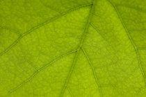 Зеленый лист — стоковое фото