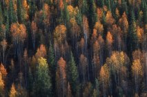 Autumnal Woodland aerial view — Stock Photo