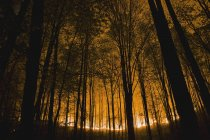 Glow Of Forest Ground Fire — Stock Photo