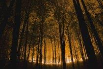 Resplandor del fuego de tierra de bosque - foto de stock