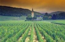Виноградник подается на открытом воздухе — стоковое фото